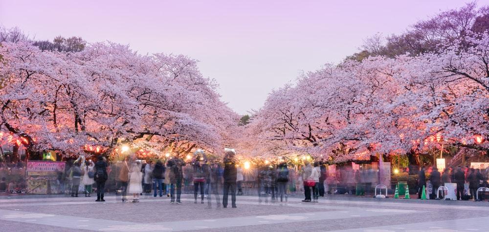 Image result for Ueno Park